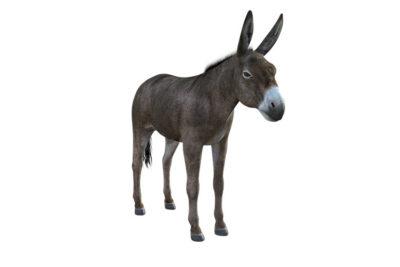 R1. Donkeys
